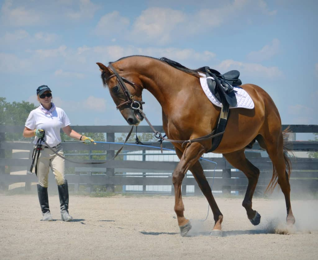 VISIT HORSE COUNTRY | What Can Thoroughbreds Do After Racing?